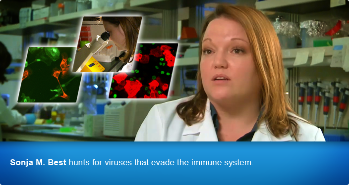 Sonja M. Best hunts for viruses that evade the immune system.