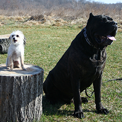 two breeds of dog that have massively differing physical traits