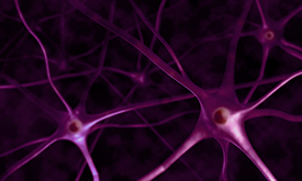 NEURONS STAINED PURPLE