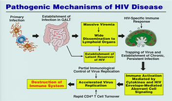 chart showing pathogenic mechanisms of HIV disease.