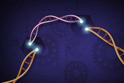 Illustration of a broken DNA strand showing where gene editing may take place.