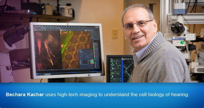 Bechara Kachar uses high-tech imaging to understand the cell biology of hearing.