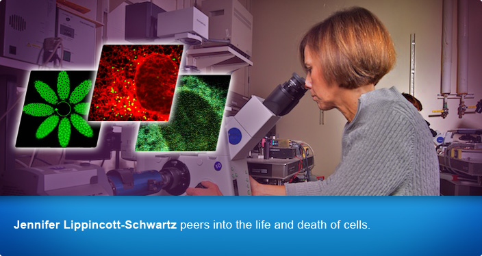 Jennifer Lippincott-Schwartz peers into the life and death of cells.