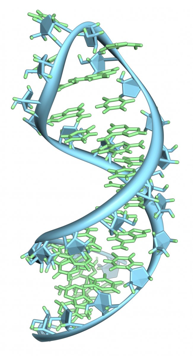 A hairpin loop from a pre-mRNA with its bases (light green) and backbone (sky blue).