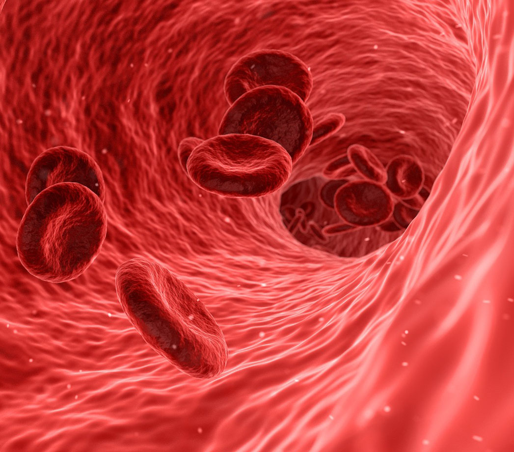 red blood cells traveling through a blood vessel