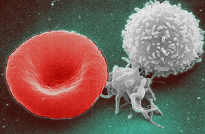 red blood cell (left), platelet (middle), and white blood cell (right)