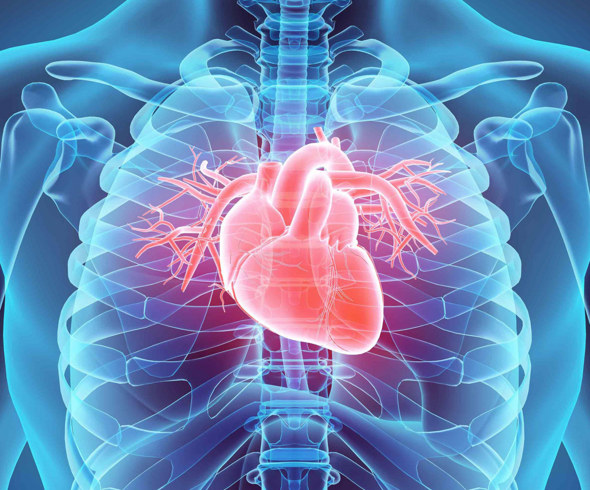transparent view of the body with heart highlighted