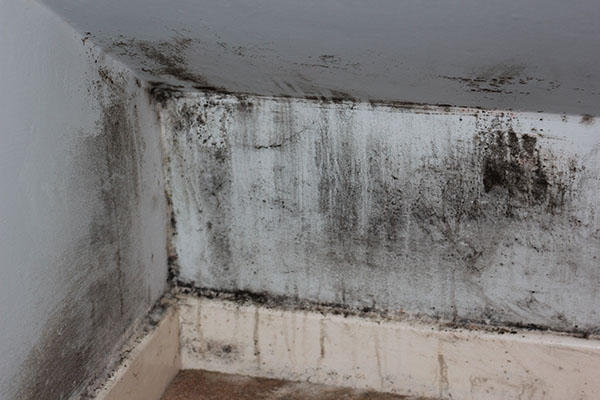 black mold growing on a wall