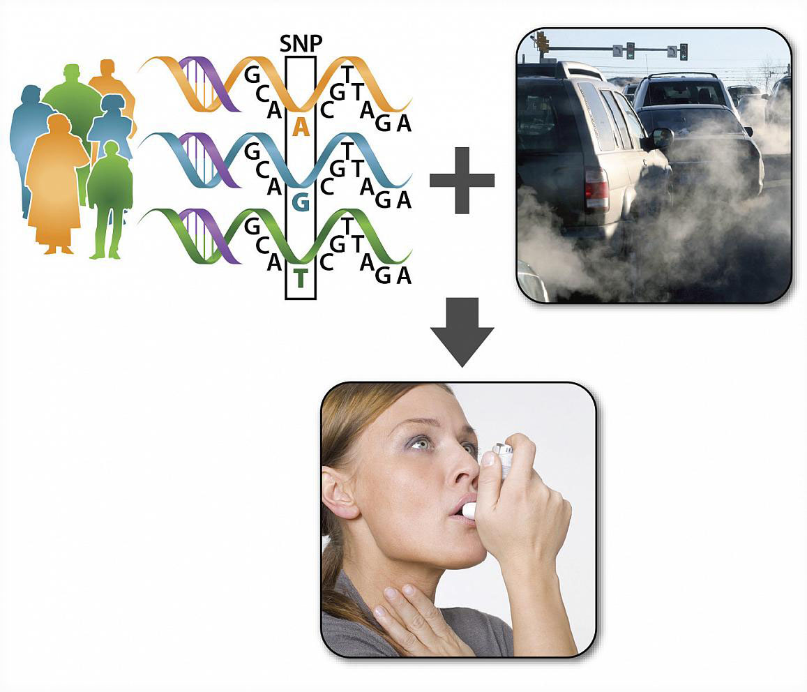 graphic depicting the relationship between genes, air pollution, and asthma