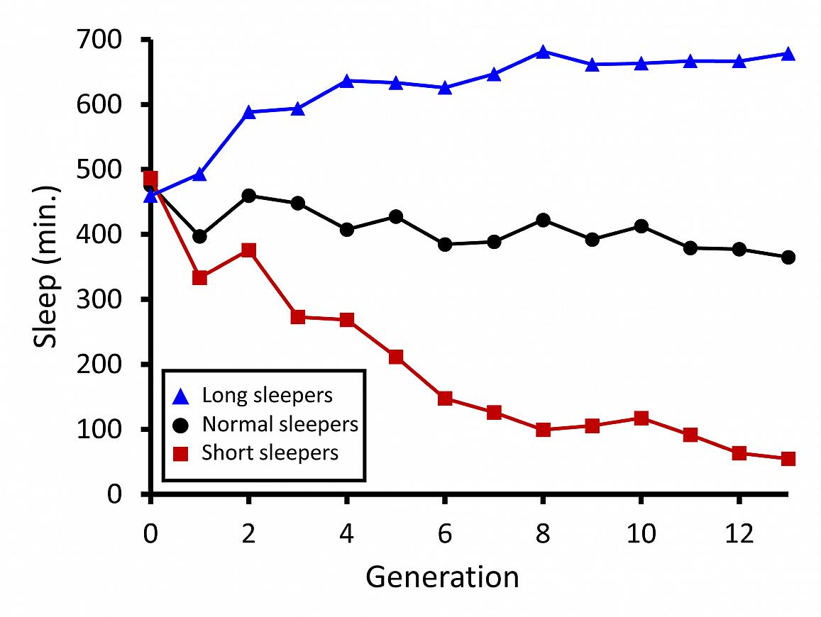 Graph showing sleep duration (in minutes) of wild fruit flies—long sleepers, normal sleepers, and short sleepers—artificially bred across 13 generations.