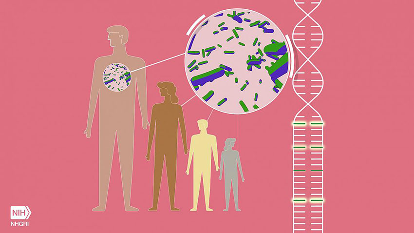An animation depicting specific genomic variants that cause a disease called familial Mediterranean fever (FMF) and may also confer increased resilience to the plague