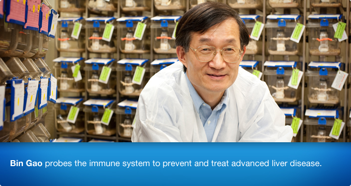 Bin Gao probes the immune system to prevent and treat advanced liver disease