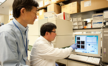 Dr. Gao and research fellow Dechun Feng, Ph.D., monitor flow cytometry measurement of various types of immune cells in alcoholic livers using a computer in their lab at NIH.