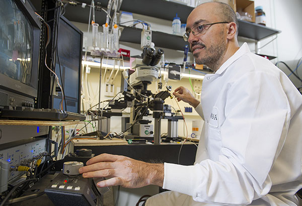 Martín Adrover measures dopamine release from neurons in live brain tissue under a microscope