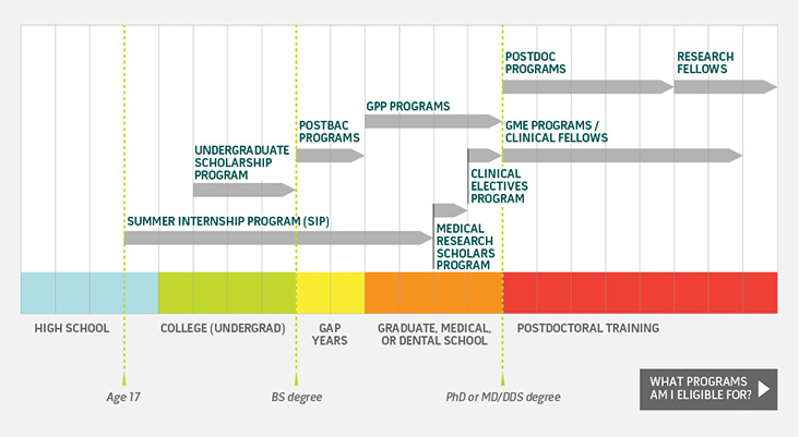 Chart showing Intramural Research Program training programs based on stages of education